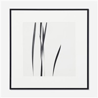 mother in law plant by harry callahan