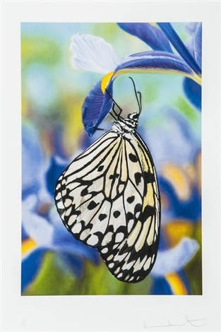 paper kite butterfly on spanish iris by damien hirst