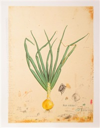 how to grow an onion by will mentor