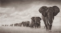 elephants walking through grass, ambroseli by nick brandt