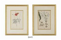 untitled (from a curious herbal; 12 works) by elizabeth blackwell