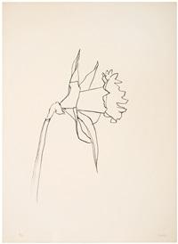 daffodil by ellsworth kelly