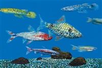 fishes by ahn chang-hong
