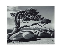 special edition of fine prints: photographs of yosemite by ansel adams