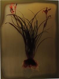 untitled (flower) by adam fuss