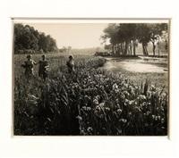 fioritura di iris by mario gabinio