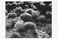 sage brush; voyage of the eye (2 works) by brett weston