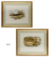 british freshwater fishes (10 works) by william hougton