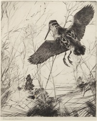 woodcock by frank weston benson