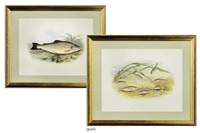 untitled (from british fresh-water fishes)(+ 10 others; 11 works) by william hougton