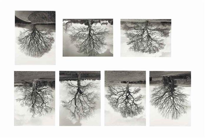 welsh oak 1 7 in 7 parts by rodney graham