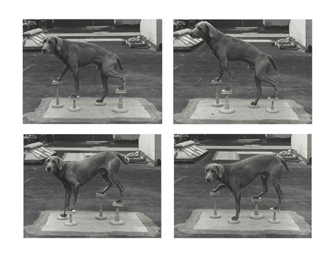 man ray on stilts 4 works by william wegman
