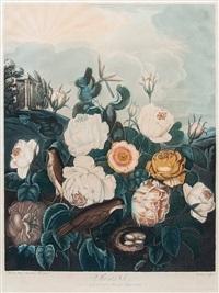 roses by richard earlom