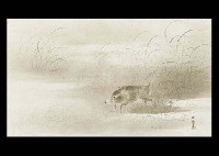 wild boar by hogai kano
