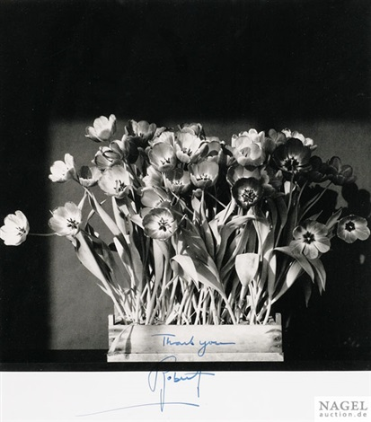 tulpen by robert mapplethorpe