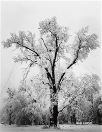 oak tree, snowstorm, yosemite valley by ansel adams