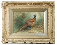 study of a pheasant by charles whymper