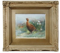 study of grouse by charles whymper