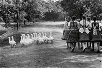 hungary (girls with geese) by elliott erwitt