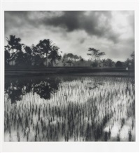 sally gall: selected landscapes ii (13 works) by sally gall