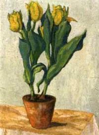tulpen by fritz kettnacker