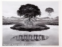 untitled: floating trees by jerry uelsmann