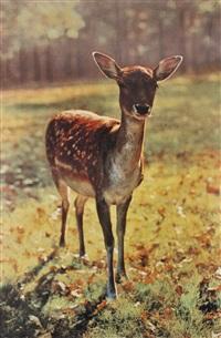 the bavarian deer by paul mccarthy