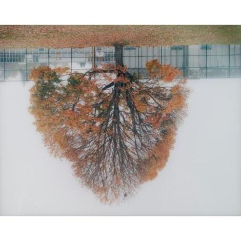 schoolyard tree, vancouver by rodney graham