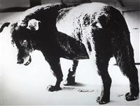 misawa dog by daido moriyama