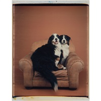 two dogs on a chair, 1996 by william wegman