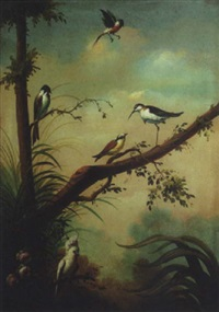 tropical birds by ira monte