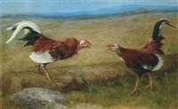 the cock-fight by david east