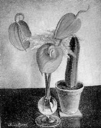 drei anthurienblüten by will ameln