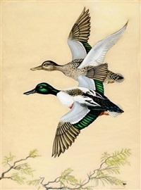 duck in flight by anne worsham richardson