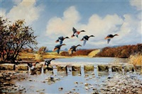 ducks taking flight (+ ducks flying low; pair) by wilfred bailey