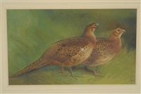 two hen pheasants in a covey by charles whymper