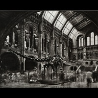 diplodocus #2, natural history museum, london by matthew pillsbury