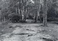 berlin grunewald by michael schmidt