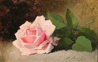 a pink rose on a table by marie-lucie cornelius