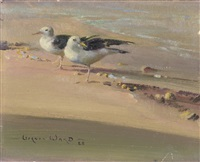 two gulls on a beach by vernon ward