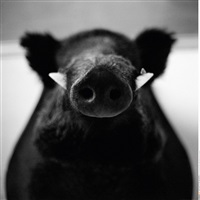 untitled (from fake animals) by andres liankevich