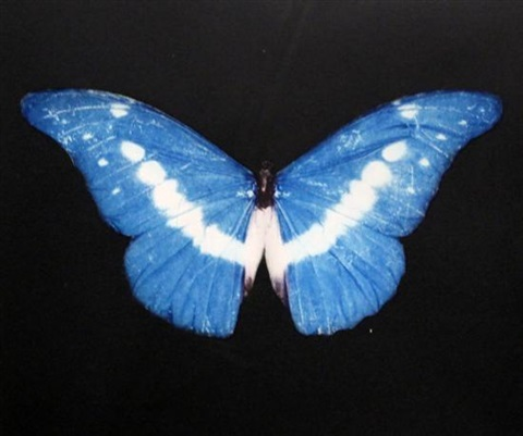blue butterfly by damien hirst