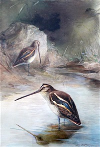 snipe beside a stream by charles whymper