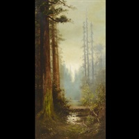majestic california redwoods by astley david middleton cooper