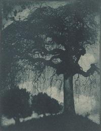 ash tree by rudolf koppitz