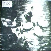 ducks on pond by jean paul argott