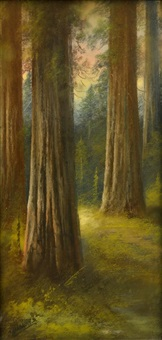 through the redwoods by carl sammons