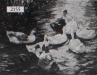 ducks in a pond by jean paul argott