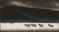 zebras crossing lake, ngorongoro crater by nick brandt