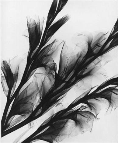 gladioluses iris lillies 2 works by herbert w franke